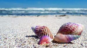 seashell-2821388_640