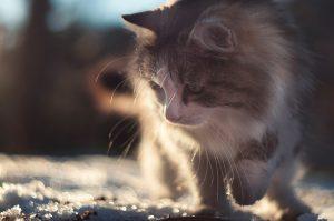 cat-1873223_960_720